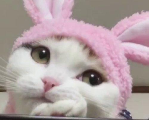 Котик в маске-шапочке зайчика